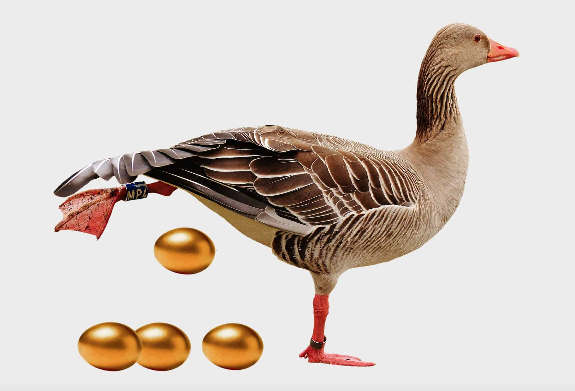Why earnings are the golden goose of Wall Street